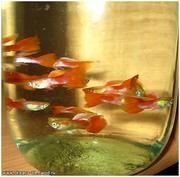 рыбки продам по договорной цене