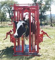 Станки для ветеринарного обслуживания КРС,  оборудование БСК