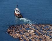 Ищу бизнес-партнера в сфере переработки и продажи лесоматериалов