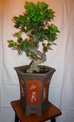 Бонсай-карликовые деревья из Японии