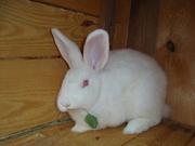 Продаю кроликов разных пород.